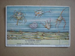 Chromos Liebig, Le Plancton Marin, N°5  (C1) - Liebig