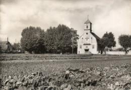 CPSM ILLKIRCH GRAFFENSTADEN. église Protestante,  1953 - Non Classés