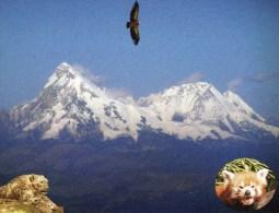 Postcard - Sagarmatha National Park, Nepal. WhsN14 - Nepal