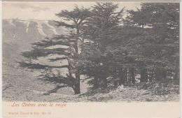 25425g LIBAN - Cèdres Avec La Neige - Tarazzi & Fils Editeur - Liban