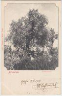 25440g JERUSALEM - Gethsemane - 1902 - Joseph A. Mitri  Editeur - Israel