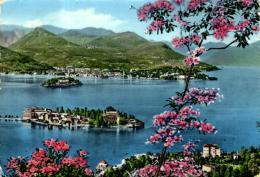 88690 - Italie    Lac Majeur   Les Iles Et Pallanza - Italia