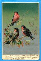 Madd074, Oiseaux, Relief , Bonne Année, Rouge-gorge, Précurseur, Circulée 1904 - Vogels