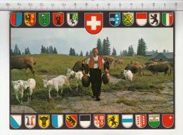 Folklore Suisse - A L'alpage / Auf Der Alp (Sellamatt) Chèvre / Ziege / Goat / Capra - Personnages