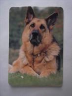 1 Calendar - Portugal Animal Cão Cao Dog Chien Cane Hund Hond Perro (2 Scans) - Calendari