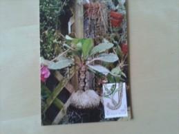 Bijzondere Planten Mierenplant Afgestempeld Meise - Postales