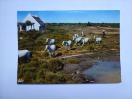 CP , Cheval , Horse , Camargue - Chevaux