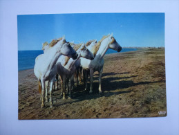CP , Cheval , Horse , Camargue , Gardian - Chevaux