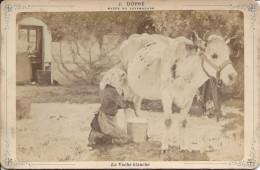 Carte Photo Musée Du Luxembourg, La Vache Blanche, J. Dupré - Other Collections
