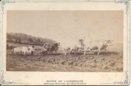 Carte Photo Musée Du Luxembourg, Labourage Nivernais, Par Rosa Bonheur - Other Collections