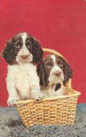 DOGS / HUNDE / CHIENS /  -     Postcard   Unused   ( P 2730 ) - Hunde