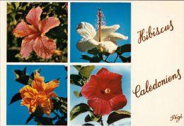 1 AK New Caledonia Neukaledonien * Hibiscus In Neukaledonien * - Neukaledonien