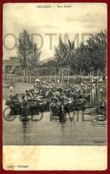 GOLEGA - UMA BOIADA - 1905 PC - Santarem