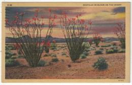 Ocotillo In Bloom On The Desert - Etats-Unis