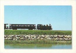 Divers  H62           Petit Train De La Baie De Somme Et Moutons Des Prés Salés - Unclassified