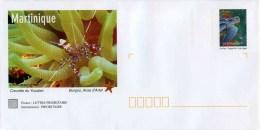 """PAP De 2007 Avec Timbre """"La Tortue Luth"""" Et Illust.""""Crevette Du Yucatan - Martinique"""" Avec Carte De Correspondance - Postwaardestukken"""