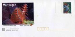 """PAP De 2007 Avec Timbre """"La Tortue Luth"""" Et Illust. """"Spirobranche - Martinique"""" Avec Carte De Correspondance - Entiers Postaux"""
