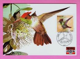 Beija-Flor Animals TRIPLE Carte Maximum Cards Maxicard Santa Tereza 1981 Brazil Wipa´81 Oiseaux Birds Fauna Faune Mc344 - Unclassified