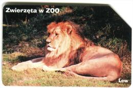 1 - Lion - Animals - Pripaid Card - Poland - Oerwoud