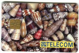 1 - Sea Life - Shell - Animals - Phonecards - Czech Republic - Non Classés