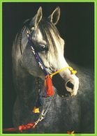 Voyo HORSE ARABER 1997  Zofia Raczkowska MINT Nr 12-85 - Chevaux