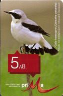 BULGARIA-BIRD-Oenanthe Oenanthe - Bulgarie