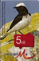 BULGARIA-BIRD-Oenanthe Pleschanka - Bulgarie