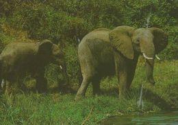 ELEPHANTS  Postcard Unused   ( Z 304 ) - Elephants