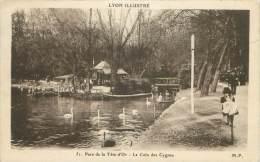 69 - LYON - Parc De La Tête-d'Or - Le Coin Des Cygnes - Autres