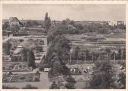 Bromberg  Bydgoszcz 2 Stück  Botanischer Garten U. Speicher An Der Brahe - Posen
