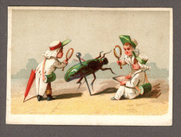 Chromo Lith. Testu & Massin TM33-7, Naturalistes, Insectes, Sans Publicité - Chromos