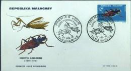 MADAGASCAR - PJ - INSECTES - 27 D�CEMBRE 1956 -