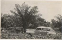Foto/Photo Ancienne. Congo. Automobile & Palmiers. 1945. - Afrika