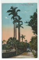 BM -ROYAL PALMS, BERMUDA - Cartes Postales