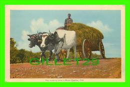 AGRICULTURE, ATTELAGES DE BOEUFS - COWS - HAY MAKING TIME IN RURAL QUÉBEC -  PECO - - Attelages