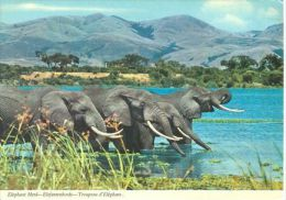 ELEPHANTS  Postcard Unused   ( Z 447 ) - Elefantes