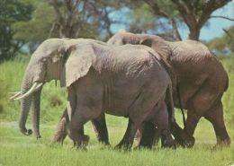 ELEPHANTS  Postcard Unused   ( Z 451 ) - Elephants