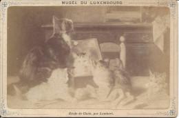 PHOTO CDV - FORMAT CABINET ..PERIER..EDITEUR Musée Du Luxembourg , Etude De Chats, Par Lambert - Alte (vor 1900)
