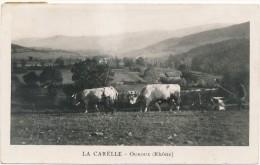 OUROUX - La Capelle - Scène De Labour, Attelage De Boeufs - Autres Communes