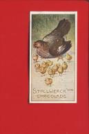 STOLLWERCK  CHROMO POULE POUSSINS - Stollwerck