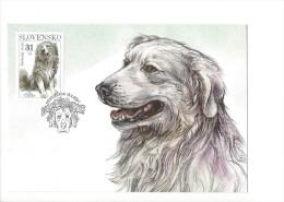 12578 -  Slovensky Cuvac Bratislava 18.04.2007 Chien Dog  (format 10X15) - Cani