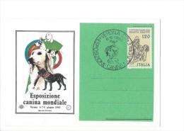 12580 -  Esposizione Canina Mondiale Verona Giugno 1980 Chien Dog Cane  (format 10X15) - Cani