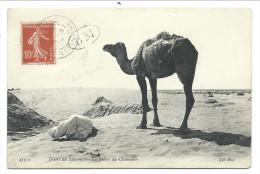 ///  CPA - Afrique - DESERT DU SAHARA - La Prière Du Chamelier  // - Sahara Occidental