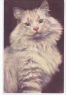 CARD CHIOSTRI GATTINO     -FP-V-2-    0882--23865 - Illustrateurs & Photographes