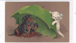 CARD  CANE BASSOTTI BASSET SAUS- SAGE DOG OMBRELLO VERDE GATTO BIANCO    -FP-V-2-    0882--23867 - Chiens