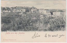 25497g JAFFA - Jardins - 1902 - Tarazzi & Fils Editeur - Israel