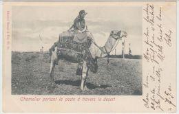 25529g  LIBAN - Chamelier portant la poste � travers le desert - 1902 - Tarazi & Fils Editeur