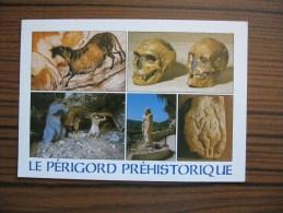 Musée Des Eysies      Périgord  Lascaux      Homo Préhistorique Néanderthalensis - Museum