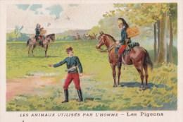 Chromo 1900 Les Animaux Utilisés Par L'homme : Les Pigeons (chasse,oiseaux) - Chromos