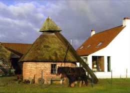 ERTVELDE - Evergem (O.Vl.) - molen/moulin - Fraaie prentkaart (in kleur) van rosmolen Van Holle in werking, met paard